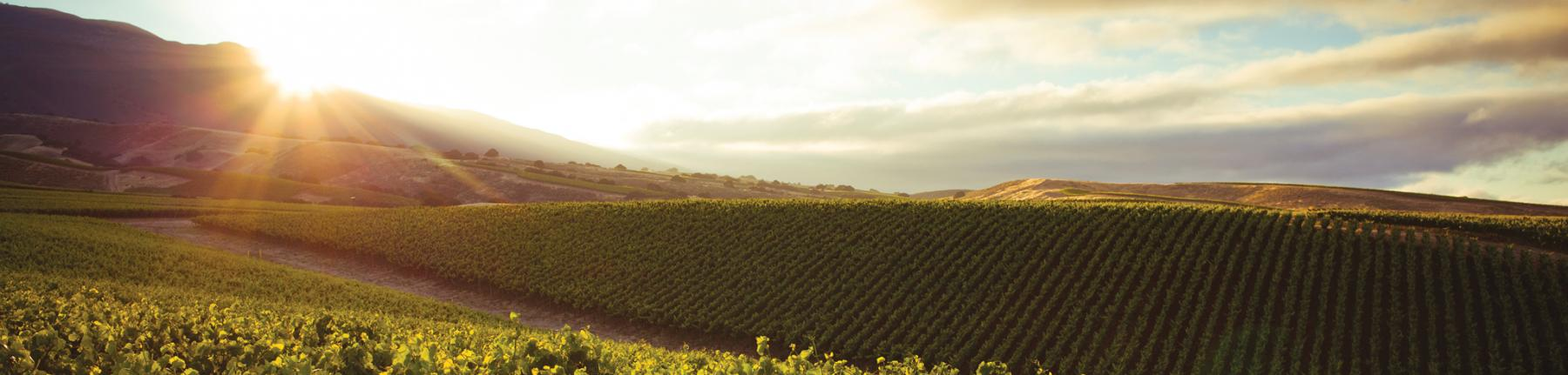 Sunrise over La Crema vineyards in Monterey County, California