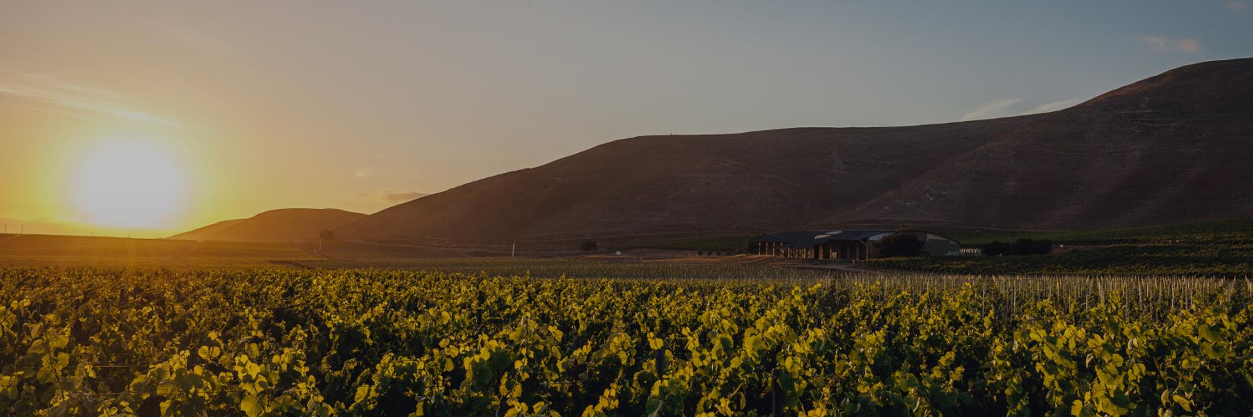 Byron vineyard, Santa Maria, Santa Barbara county, California