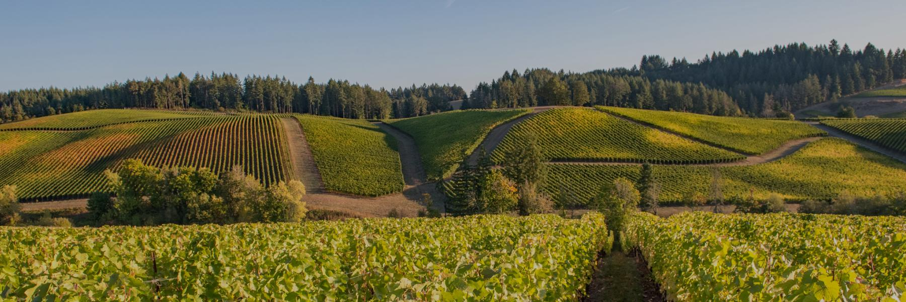 Gran Moraine vineyard, Willamette Valley, Oregon