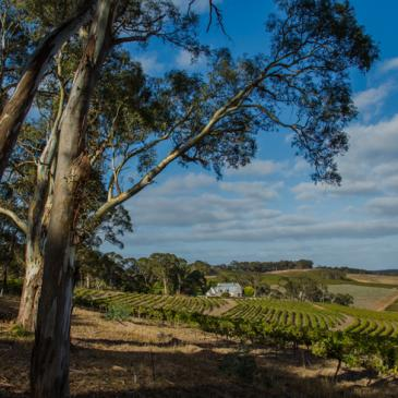 Hickinbotham Clarendon Vineyard, Australia