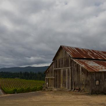 Maggy Hawk estate vineyard and barn, Anderson Valley, Mendocino County, California