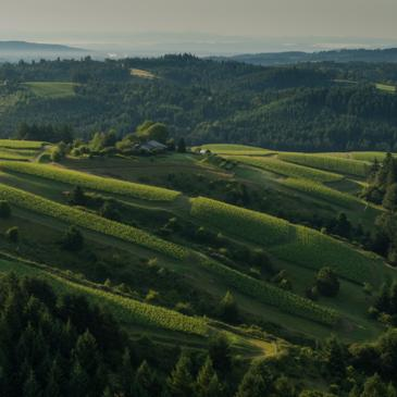 WillaKenzie Estate, Willamette Valley, Oregon
